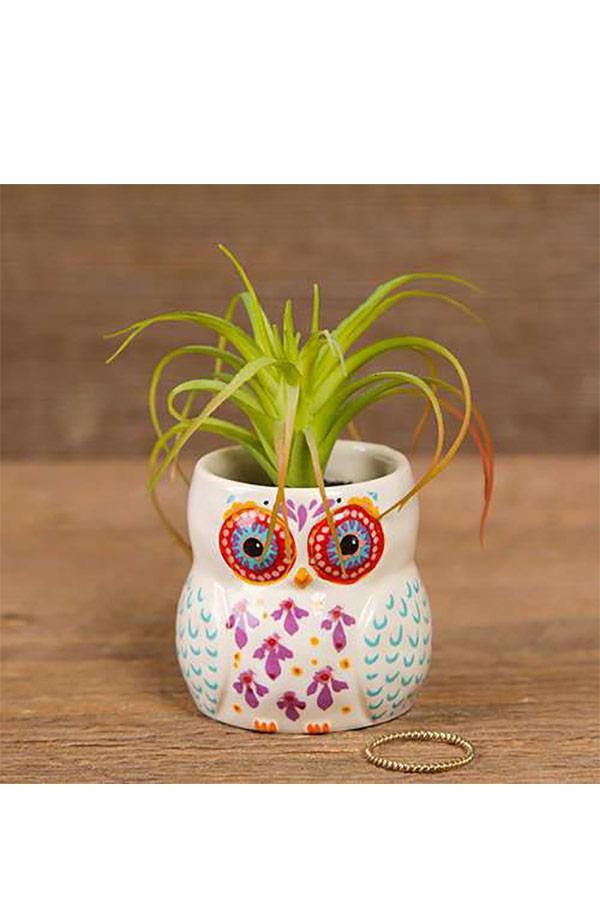 Natural Life γλαστράκι μίνι Κουκουβάγια Owl always love you PLNT012